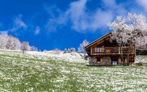 Contraste d'une neige printanière avec les arbres en fleurs
