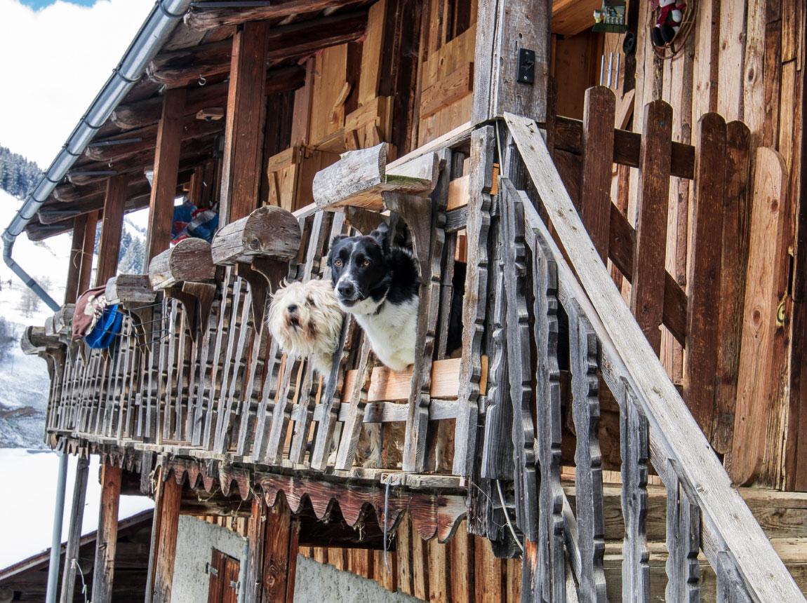 Location de chalet en Beaufortain. Chalet Frison. Chiens